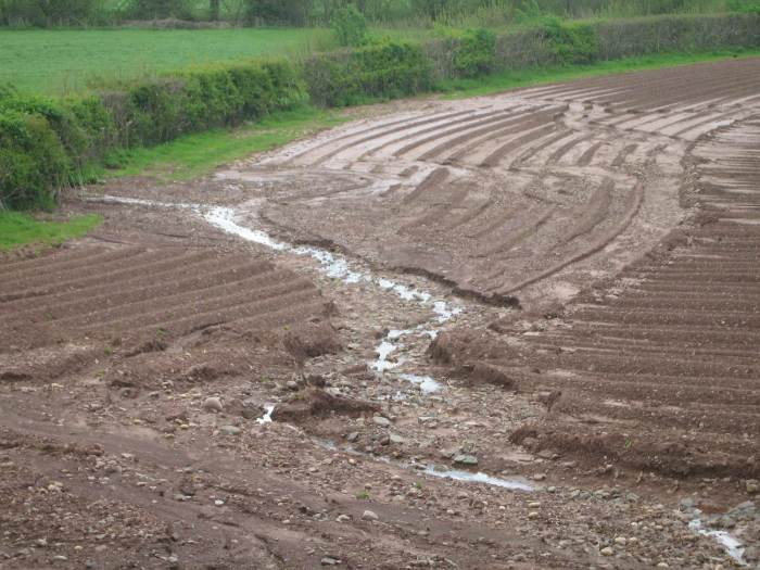 Potato field washing away